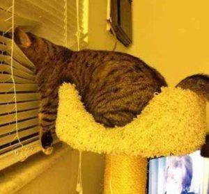 Śmieszny kot na oknie